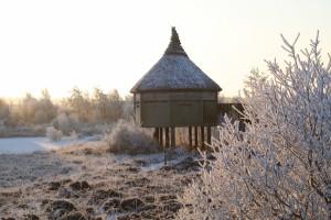Frosty-birdhide