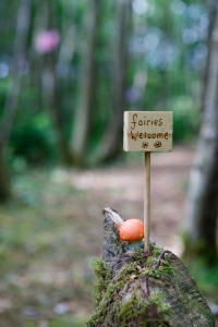 All fairies, and fairy watchers, are welcome to Lough Boora Discovery Park to visit Fairy Avenue
