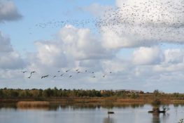 birdwatching_lough_boora