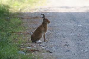 Hare-2010