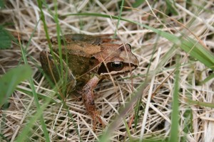 frog-2010