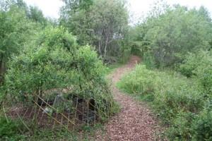 140522 Willow-Maze2