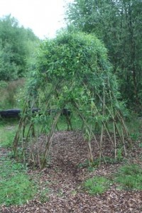 140522 Willow-Maze6