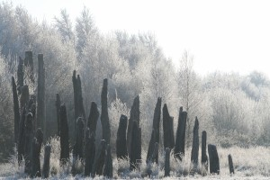 Bog-Road-Frost